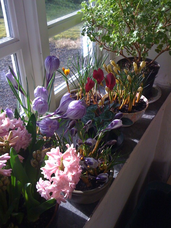 The Gay Mother's Floral Corner