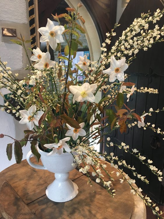 The Gay Mother's Church Flowers: the Absolute Last of the Narcissus, a White Broom and Leaves of Amelanchier