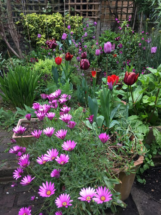 At Last in this Picture, you can See all Four Tulips