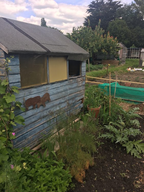Merle Barr's Allotment with Own Hut