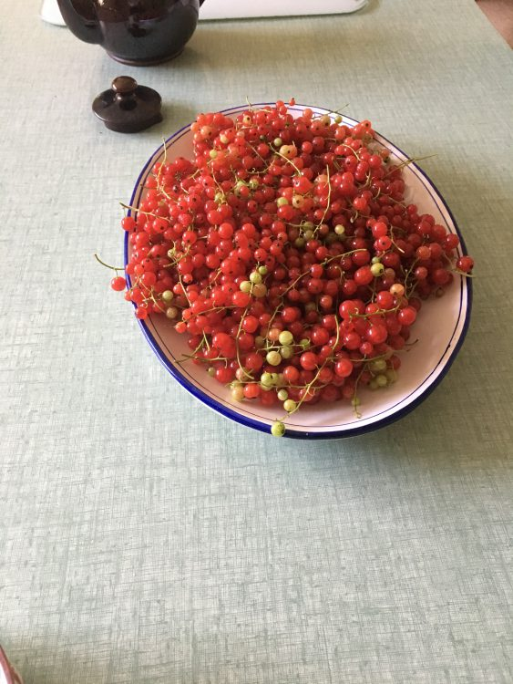 The Gay Mother's Red Currants