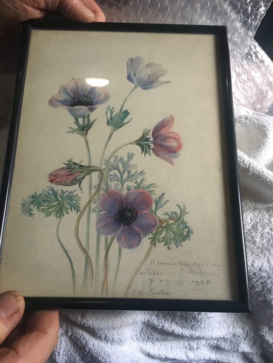 A Flower Painting by E.A.Bowles: Exhibition Needs to be Organised for May. Royston said they must Buck Up