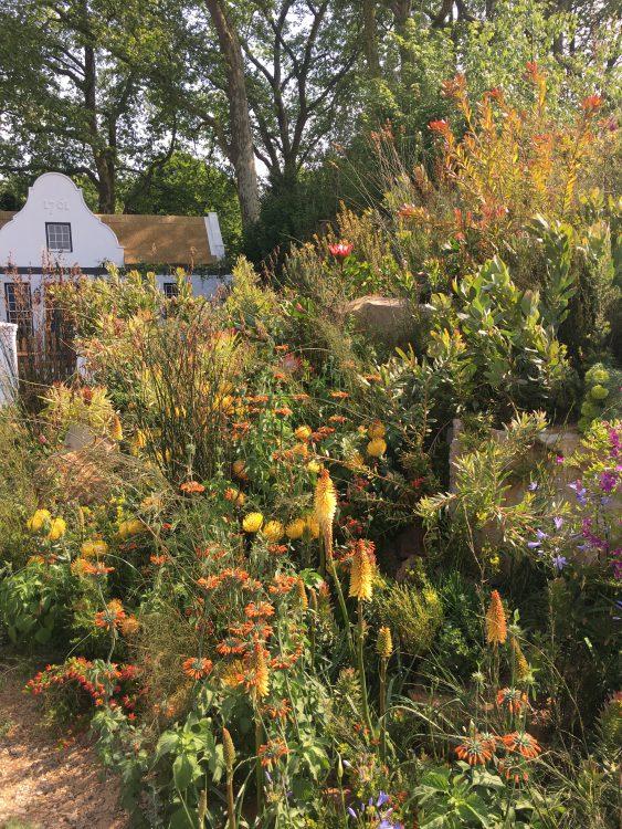 South African Garden: Gorgeous
