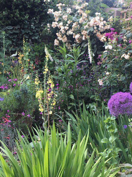 My Quite Nice Garden