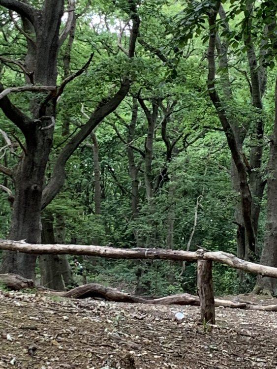 The Former Gravel Pits on Hampstead Heath