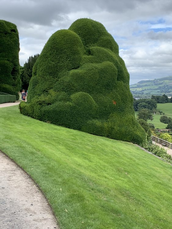 The Drama of Yew: Powis Castle