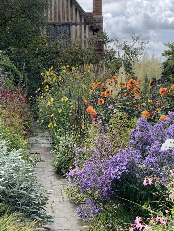 Bold and Free: Dear Precious Dixter