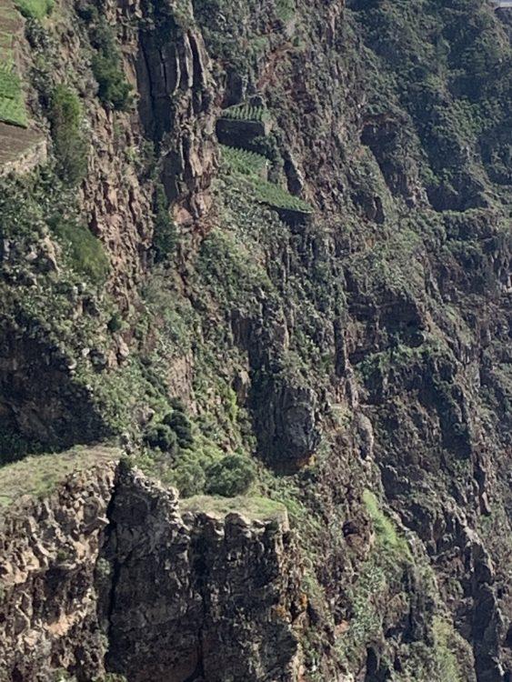 Very Sheer: Madeira