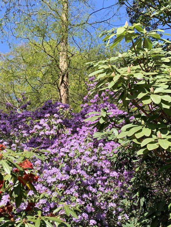 The Saville Garden: a Secret Enclosure