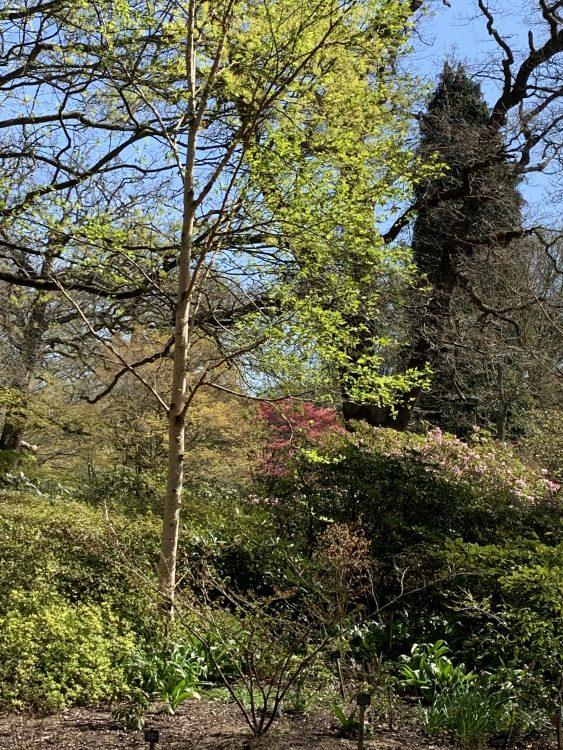 The Saville Garden, Windsor Great Park