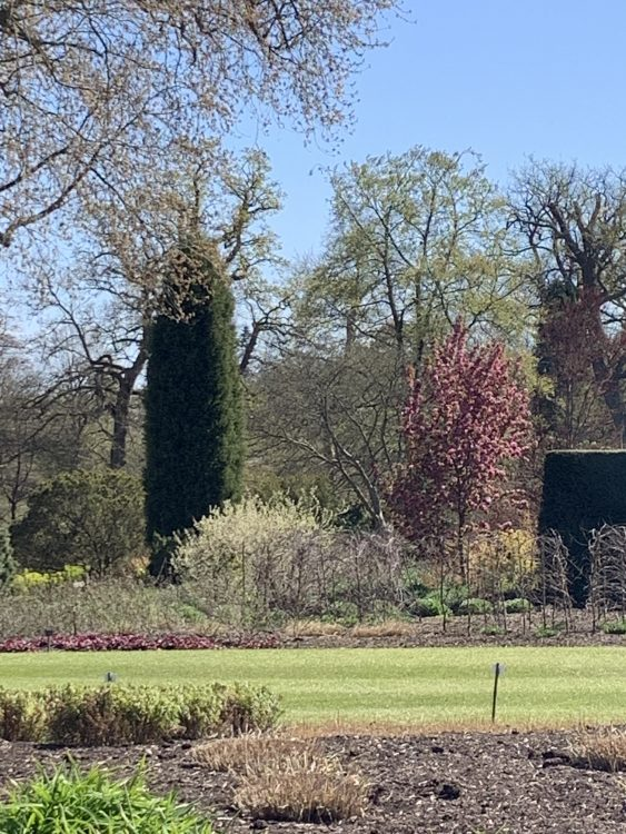 The Saville Garden: Trees and Lawns